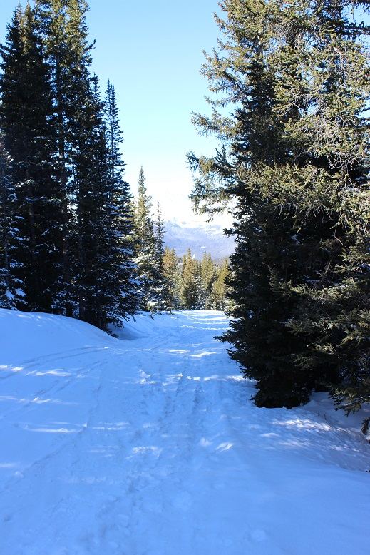 Nothing Like Bit Of Snow To Really Put >> Bald Mountain A 13 684 Wild Wanderer
